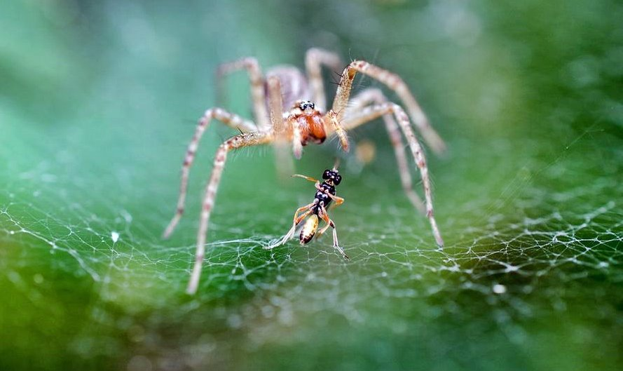 spider and prey _The Negative Effects of Criticism